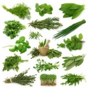 All Kind OF Ayurvedic herb and Herbal Medicine